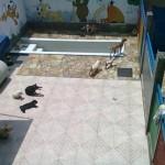 area-de-lazer-residencial-para-caes-6