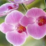 orquideas-fotos-2