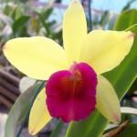 orquideas-fotos-4