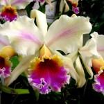 orquideas-fotos-5