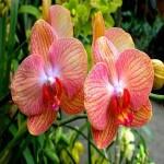 orquideas-fotos-6
