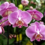 orquideas-fotos-7