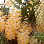 orquideas-fotos-8