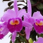 orquideas-fotos-9