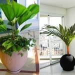 plantas-para-ambientes-internos-2