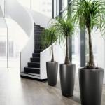 plantas-para-ambientes-internos-3
