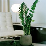 plantas-para-ambientes-internos-4