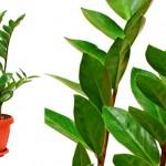 plantas-para-ambientes-internos-5