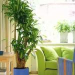 plantas-para-ambientes-internos-6