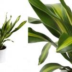 plantas-para-ambientes-internos-7