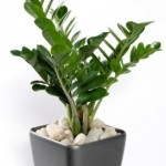 plantas-para-ambientes-internos-8