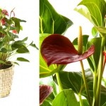plantas-para-ambientes-internos-9