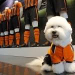 roupas-criativas-para-cachorros
