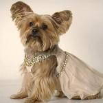 roupas-criativas-para-cachorros-2