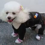 roupas-criativas-para-cachorros-3