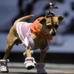 roupas-criativas-para-cachorros-4