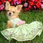 roupas-criativas-para-cachorros-6