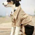 roupas-criativas-para-cachorros-7
