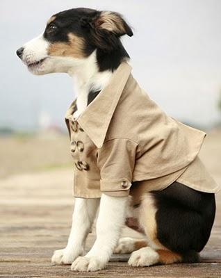 Roupas Criativas para Cachorros: Dicas e Fotos