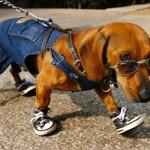 roupas-criativas-para-cachorros--8