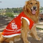 roupas-criativas-para-cachorros-9