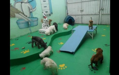 Área de Lazer Residencial para Cães: Fotos e Modelos
